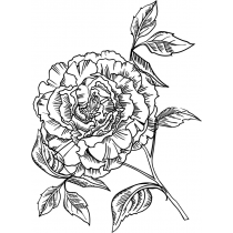Blooming Peony Stamp