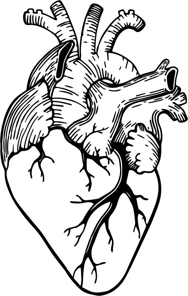 Anatomical Heart Stamp Simply Stamps